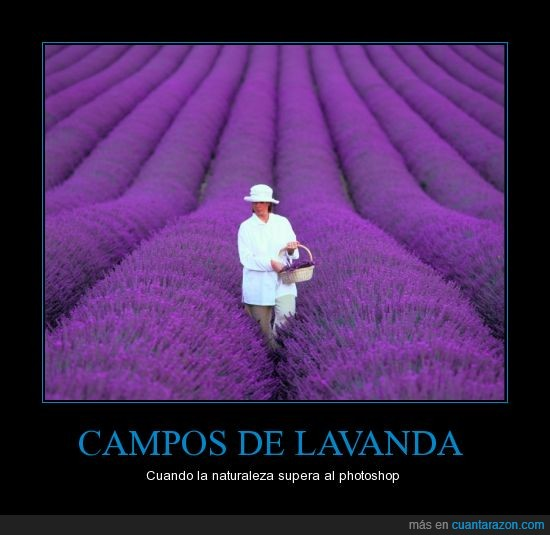 Campos,lavanda,naturaleza,photoshop,superar