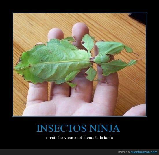 adapta,bicho,camuflaje,hoja,insecto,verde