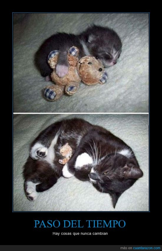 abrazar,bebe,gato,pasar,peluche,Tiempo