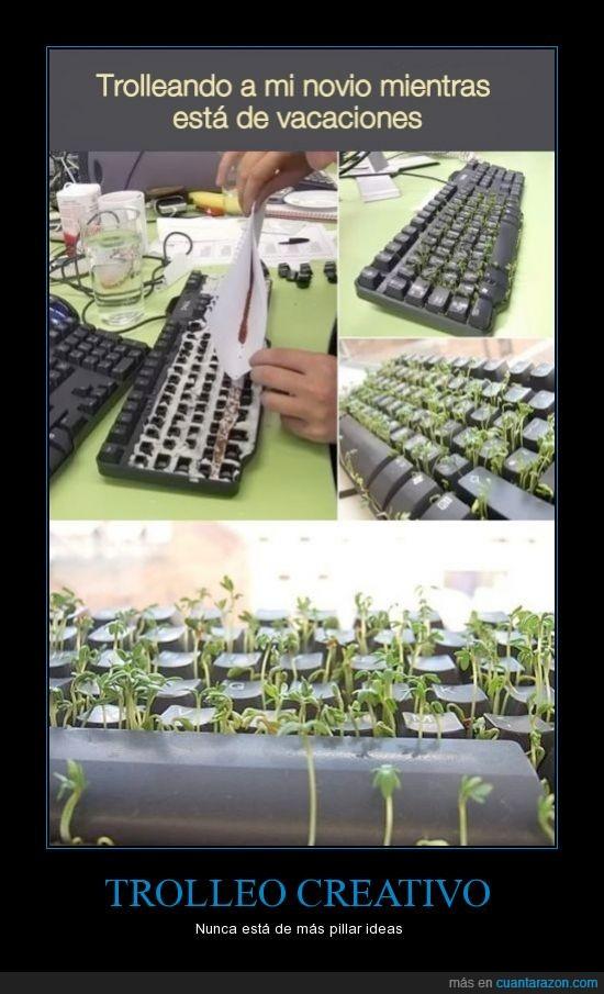 broma,pc,plantas,semillas,troll