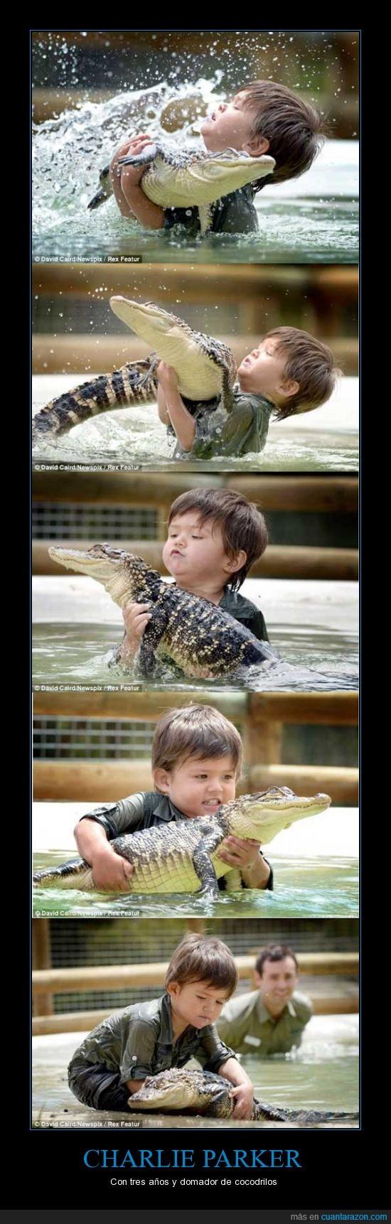 caiman,charlie,cocodrilo,domador,lagarto,niño,parker,pequeño,se quedará sin dedos en breve,zoo