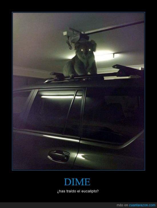 droga,koala,ojos,parking,satán