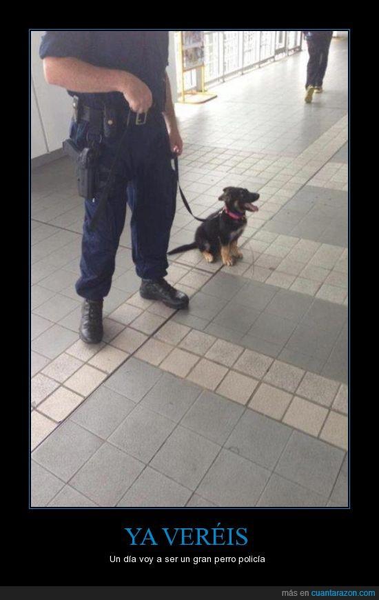 cachorro,mini,perrito,perro,policia,sobredosis de amor perruno