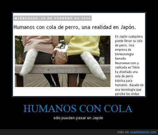 cola,humano,Japón,perro