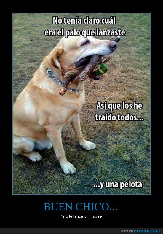 frisby,palo,pelota,perro