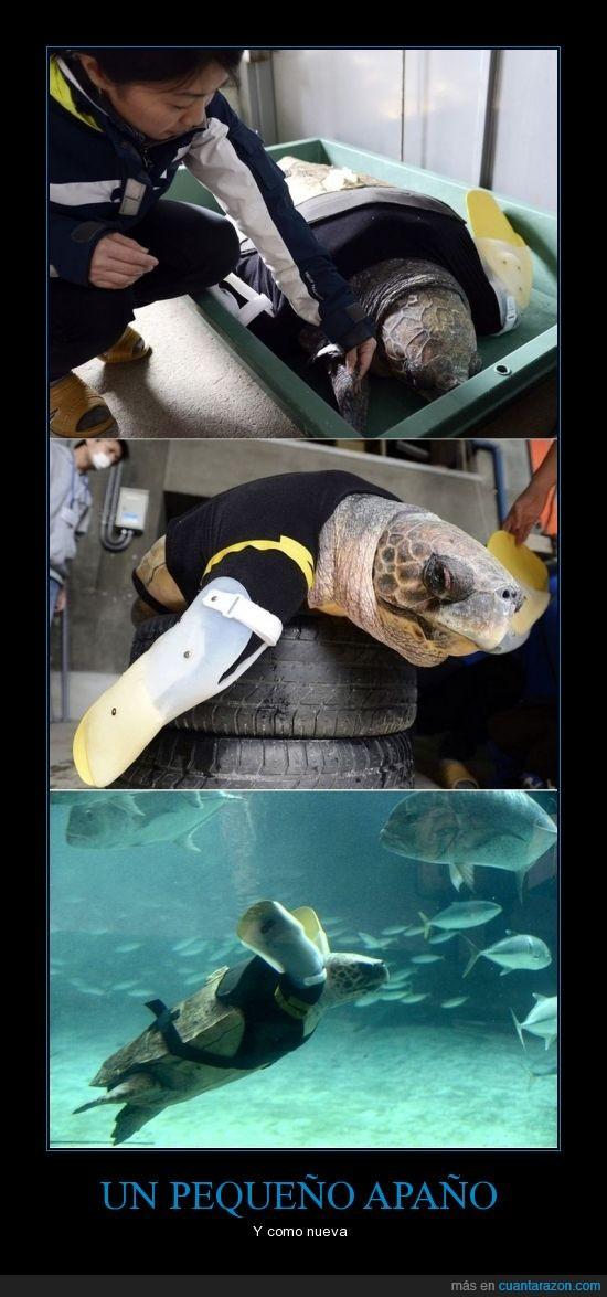aleta,fe,humanidad,nadar,protesis,tiburón,tortuga