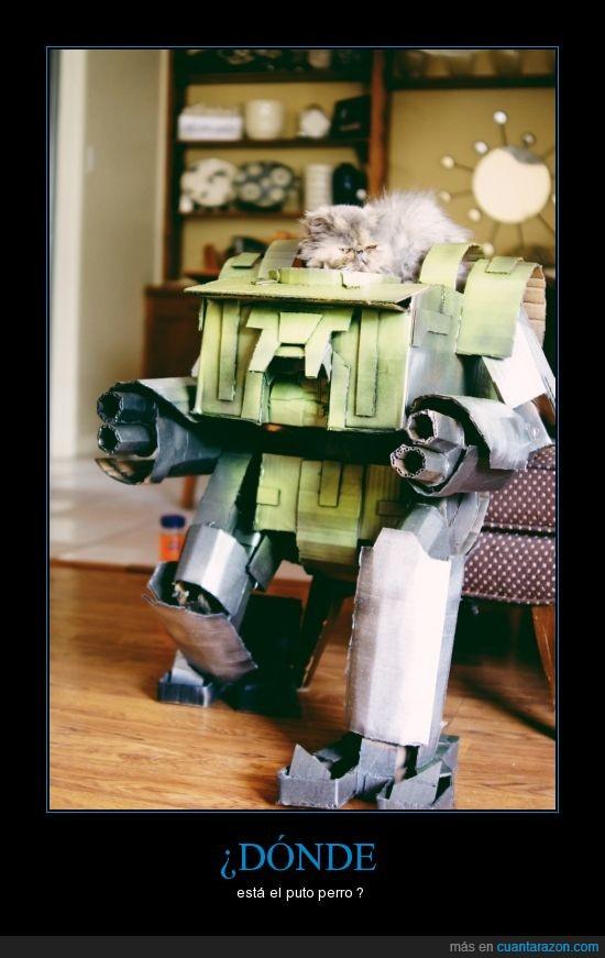 gato,laser,robot,transformer