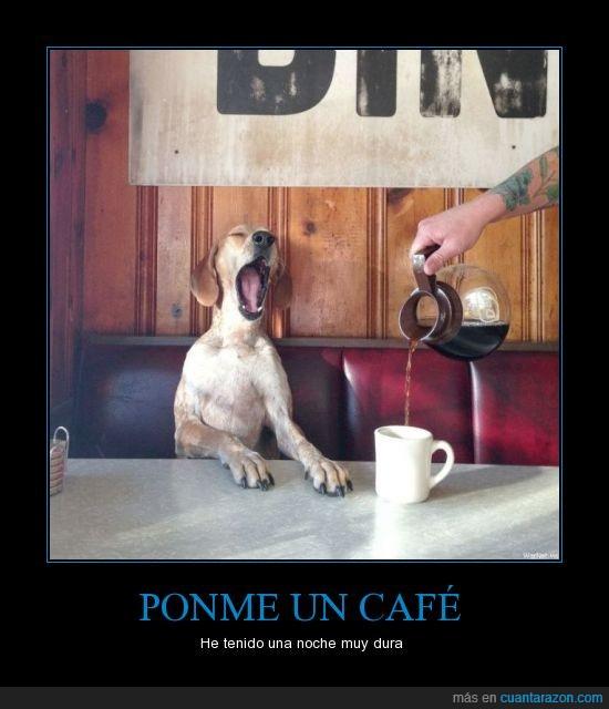 bostezar,cafe,cafeteria,mano,perro,sueño,taza