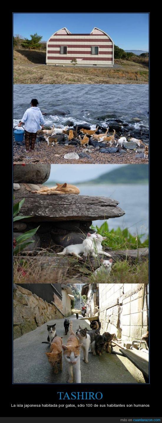 gato,humano,isla,tashiro