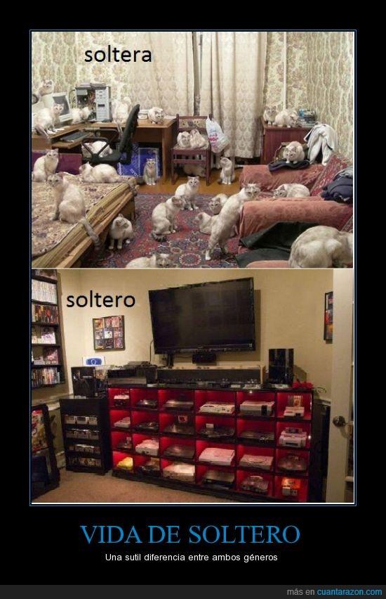 consolas,diferencia,ellos y ellas,gamers,gatos,géneros,soledad,soltero,Vida