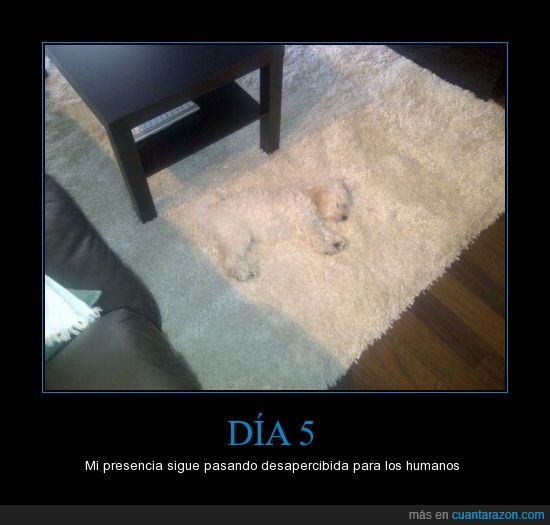 alfombra,blanco,camuflaje,comedor,diario,perro