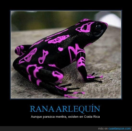 animales,color,colores,exótico,fucsia,intensa,magenta,negra,photoshop,rana,singular