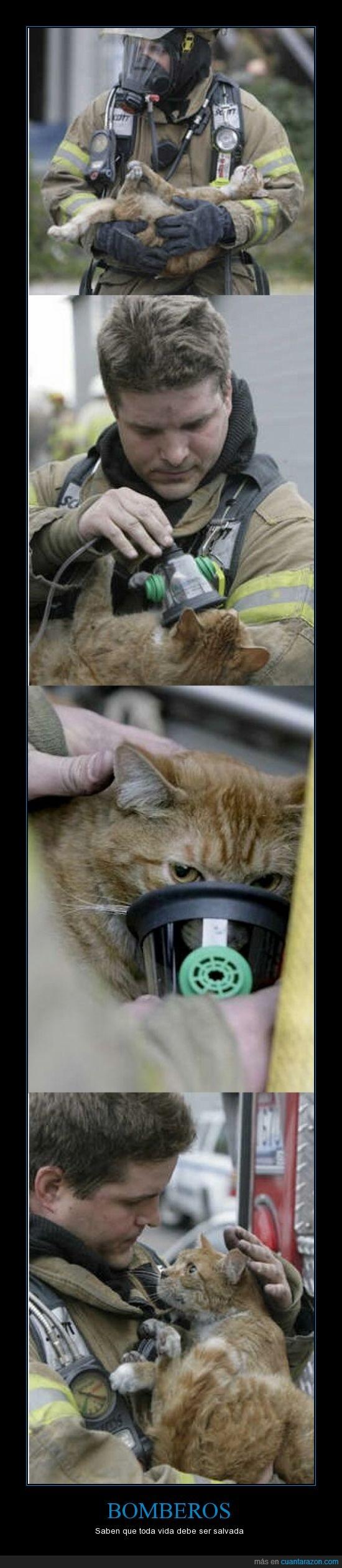 bomberos,gatos,oxigeno,paramédico,salvar