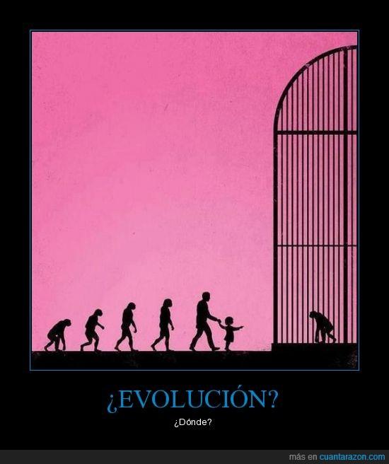 carcel,evolución,homo sapiens,humanos,injusto,jaula,mono,sapiens,triste,vergüenza,zoo