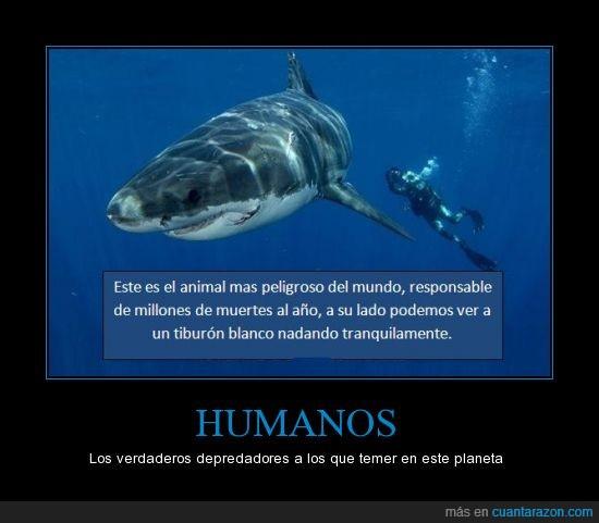 asesino,blanco,depredador,hombre,muerte,tiburon
