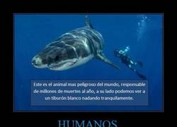 Enlace a HUMANOS