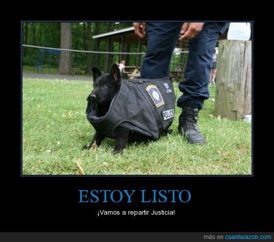 cachorro,chaleco anti balas,negro,Perro,policía,yo dejaría que me arrestase esta cosica