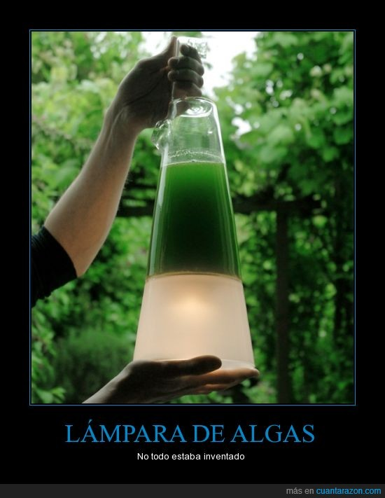 algas,electricidad,fotosíntesis,luz,tecnología
