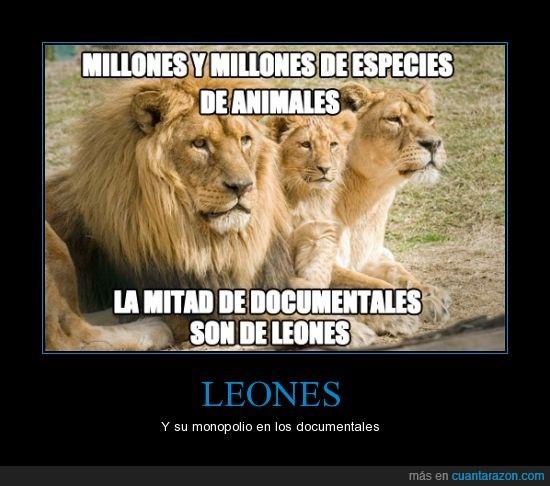 animales,documentales,familia,leona,leones,tele
