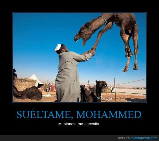 camellero,camello,encariñado,extraterrestre,grua,necesitado,planeta