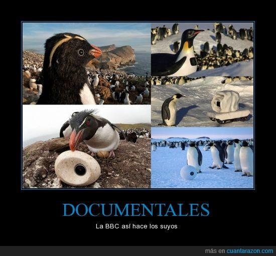 balso,BBC,colar,documentales,hacer,muñeco,pinguinos
