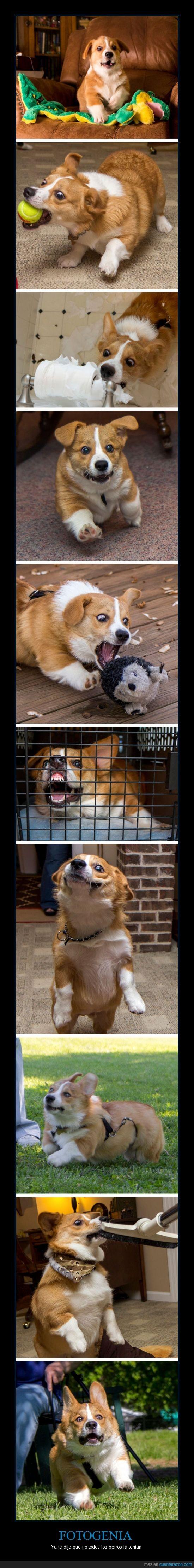 cara,derp,fotogenico,gracioso,perro