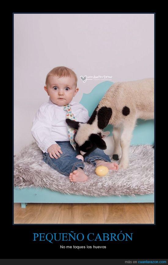 bebé,cabra,huevos,molestar,pelota