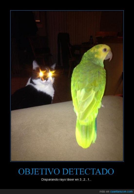 brilla,gato,laser,loro,ojo,rayo