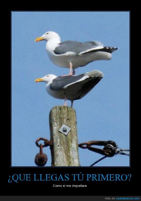 apiladas,ave,encima,gaviotas,otra,pajaro,poste,una
