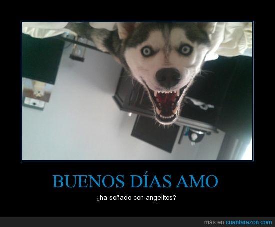 amo,da miedo,husky,perro,satan