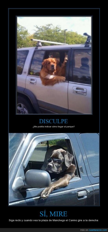 canino,cool dog,manchego,perro