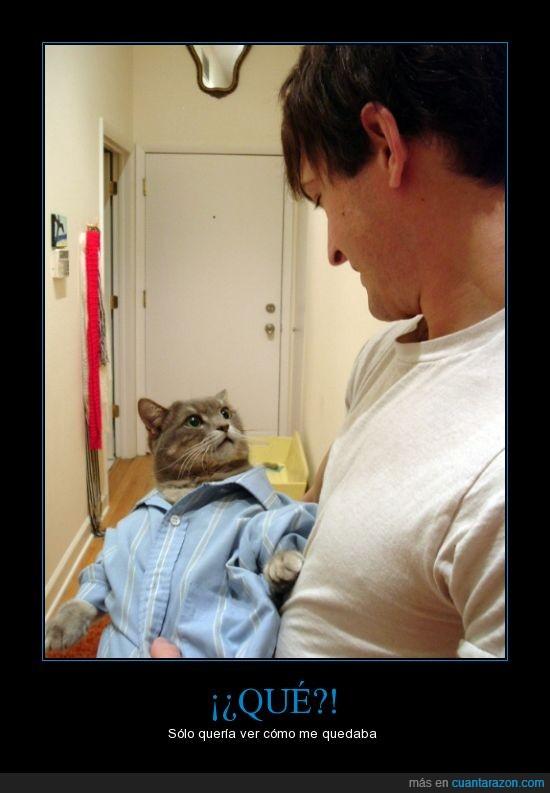 camisa,camisón,gato,qué miras,sorpresa