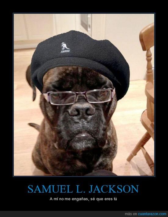 boina,gafas,gorra,negro,perro,samuel l jackson