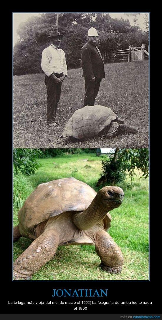 record,tortuga,vejez