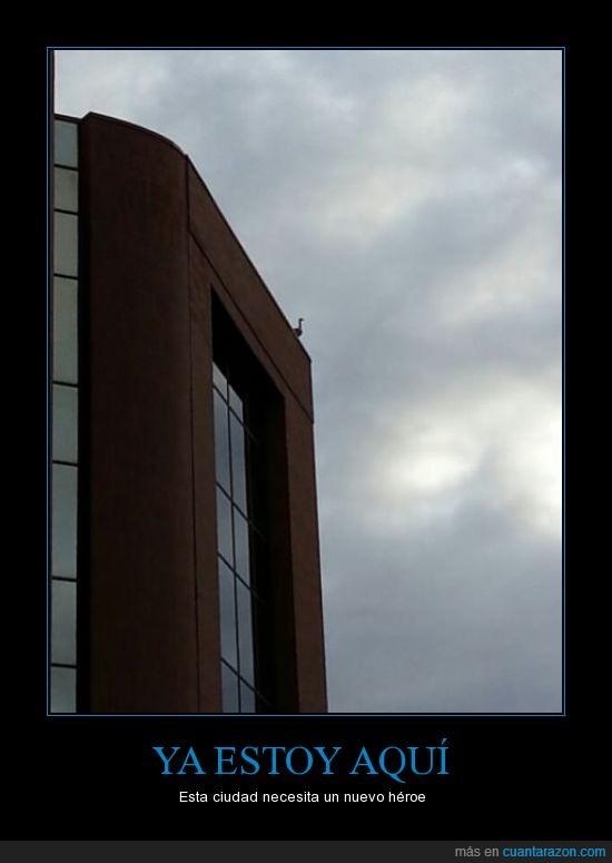 ave,edificio,héroe,pájaro