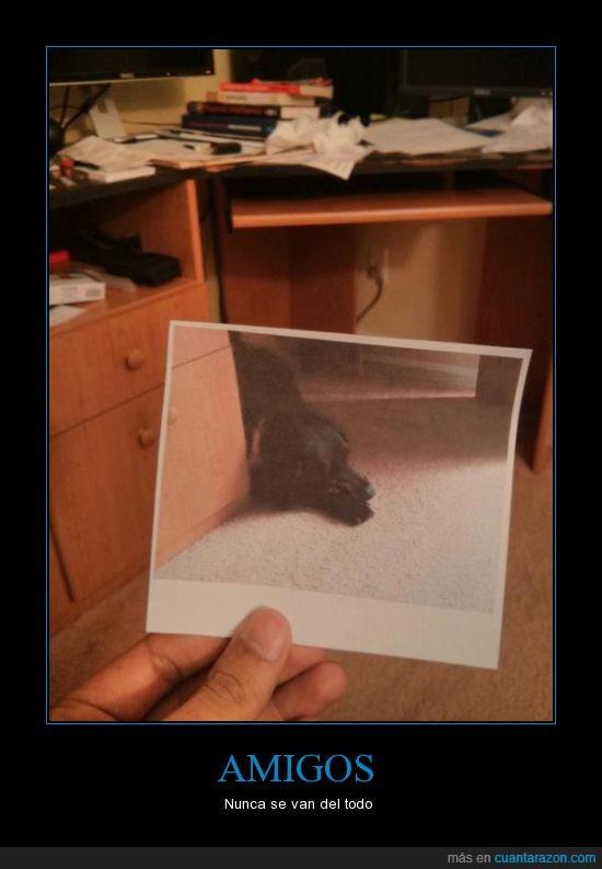 amigo,escritorio,foto,lugar,mesa,muerto,perro,recuerdo