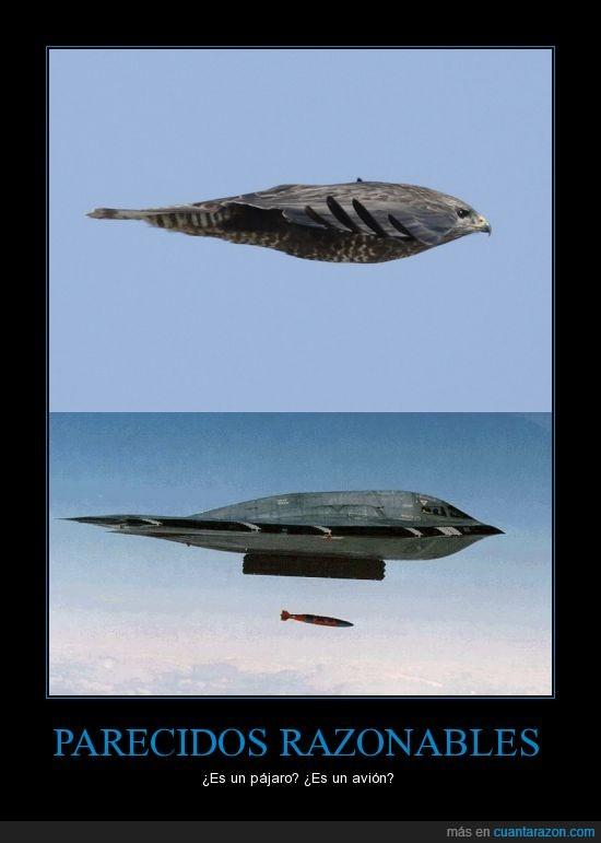 avión B2,combate,pájaro,parecidos razonables