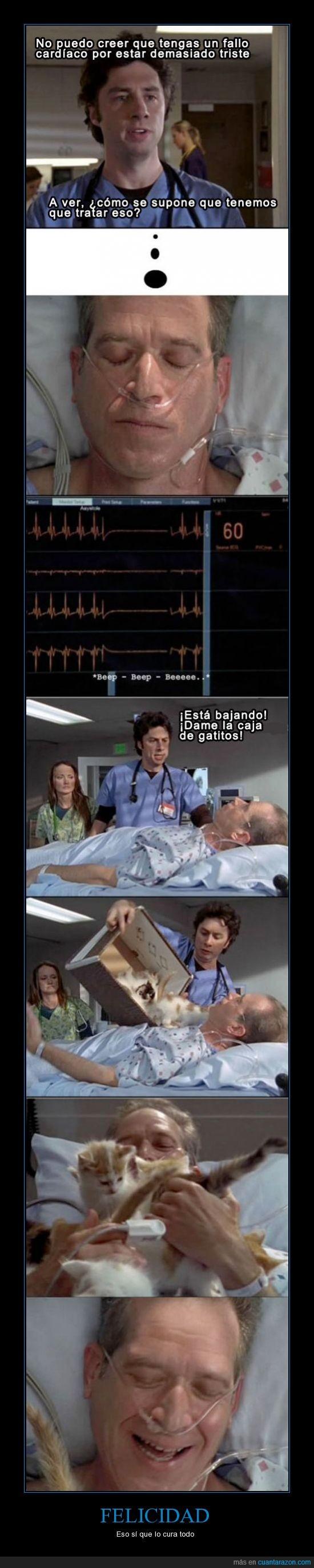 caja,corazon,encima,gatito,hospital,jd,paciente,scrubs,triste