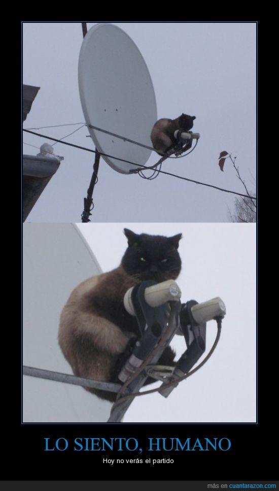 antena,futbol,gato,parabolica,señal,tapar
