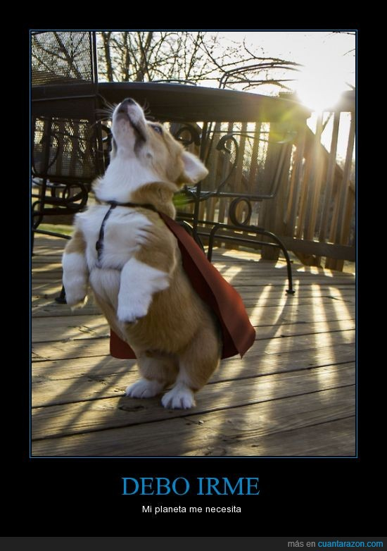 corki,perro,planeta,salvar,superhéroe