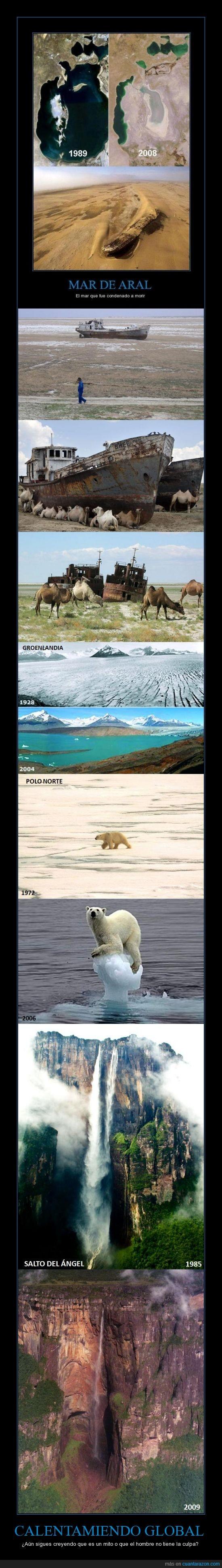 calentamiento global,cambio,destrucción,groenlandia,mar aral,naturaleza,oso,polo norte,salto del ángel