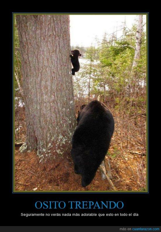 árbol tronco,bonico,mamá oso,osaza,osazo,osete,osito,oso,osoooo