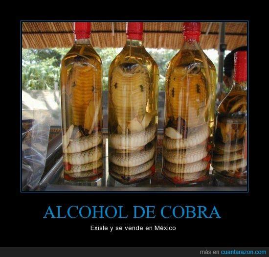 Alcohol,Bebida,Cobra,mexico,serpiente