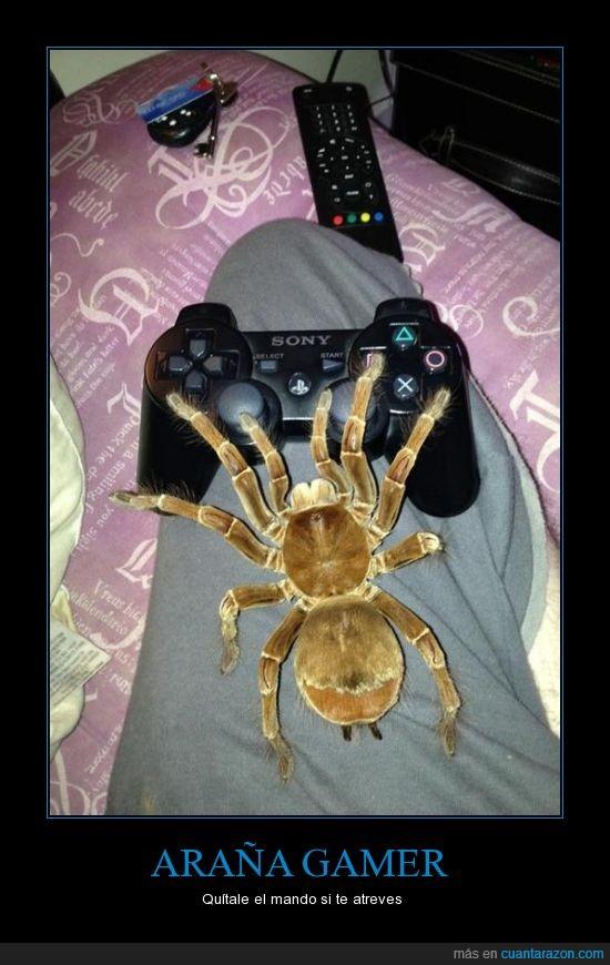 araña,enorme,gamer,mando,ps3