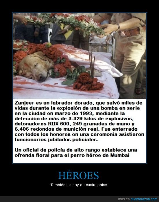 heroe,oficiales,perro,personas,salvar