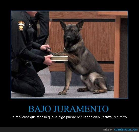 acusado,jurar,juzgado,ley,perro