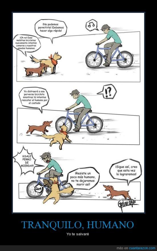 ayuda,bicicleta,humano,perro,salvar