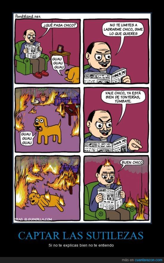 buen chico,fuego,incendio,periódico,perro
