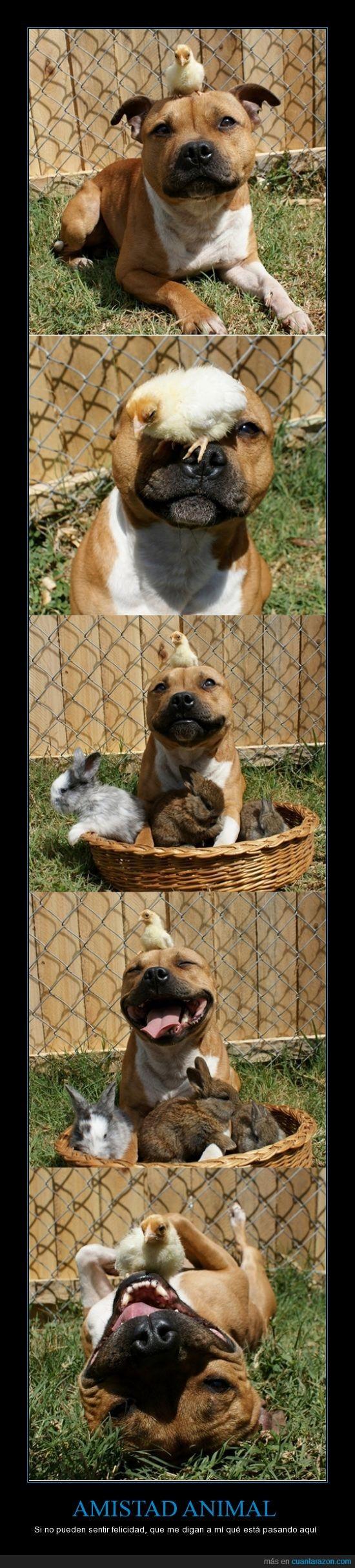 amistad,cesta,espero que no cocinen a los conejos y al pollito,perro,pollo,polluelo