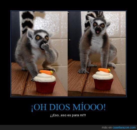 impresionado,lemur,magdalena,me lo como ya mismo,muchas gracias me encanta,qué majo eres